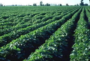 Why is Soy Ink Considered Environmentally Responsible?